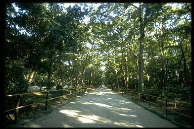 糺の森 画像